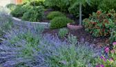 Sustainable Urban Gardens